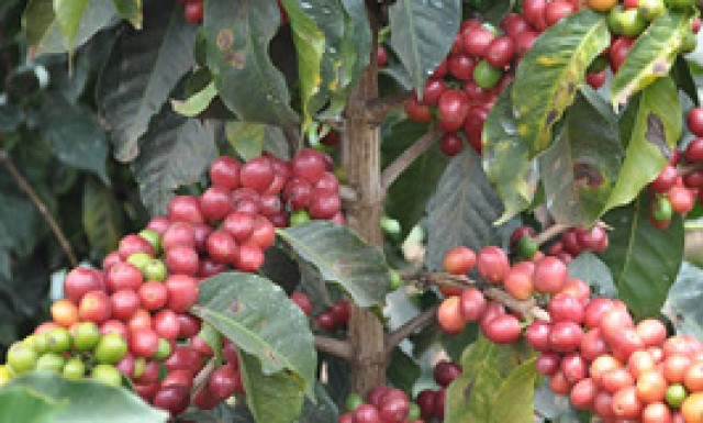 What are the coffee prices?